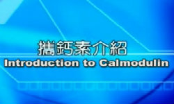What is calmodulin